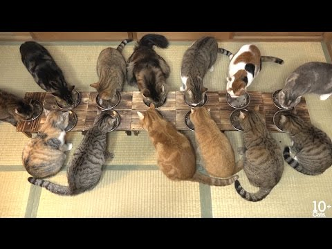ニャーニャー! かわいい鳴き声でごはんとおやつを待ちきれない猫たち