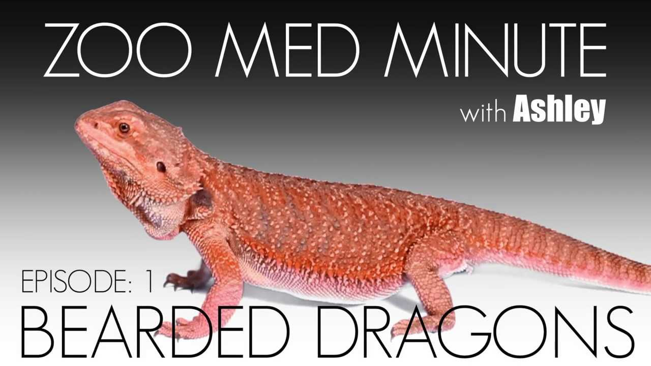 Bearded Dragon Care -Amazing Amazon