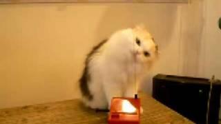 chat drôle mignon bruyant قطوة مزعجة