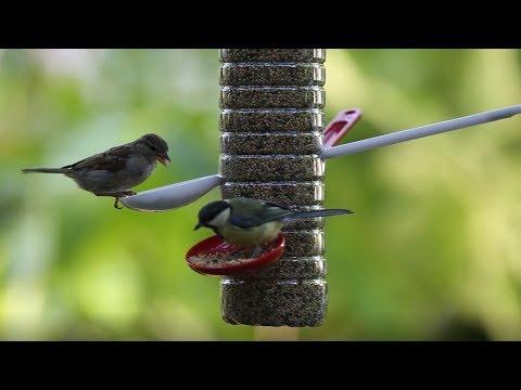 Diy Realiser Une Mangeoire A Oiseaux Truffaut Youtube