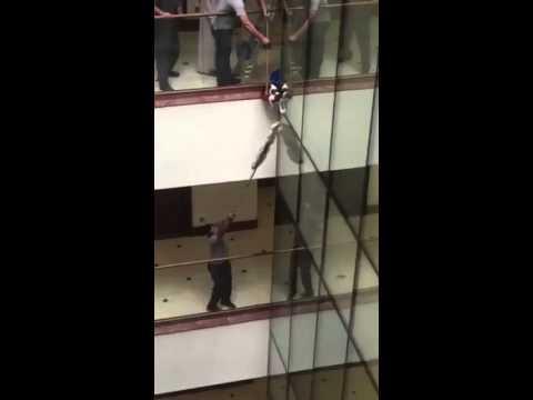 Cat falls 9 stories