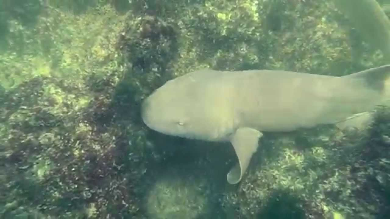 Marco Island Snorkeling