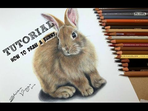 TUTORIAL #9 - How To Draw A Realistic Bunny - Channel Sheldene Fine Art
