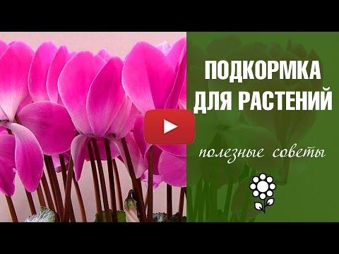 Маска от облысения с перцемиз YouTube · Длительность: 3 мин  · Просмотры: более 12.000 · отправлено: 20.11.2017 · кем отправлено: Elena Matveeva