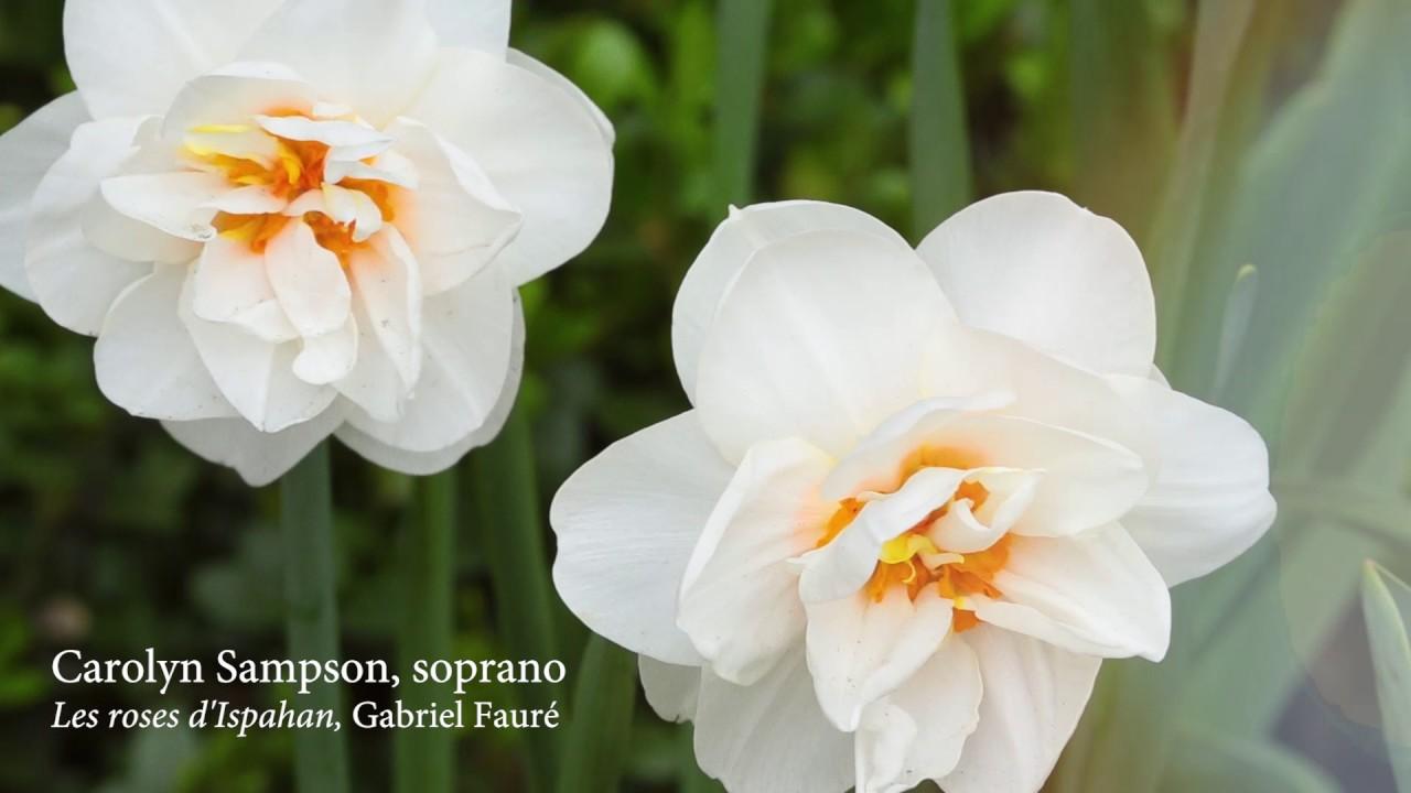 Carolyn Sampson: Fleurs