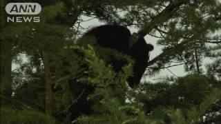 富士急ハイランド内のホテルでクマを捕獲(10/07/28)