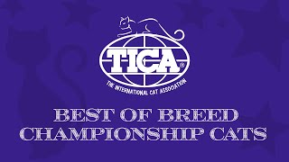 Best of Breed Championship Cats