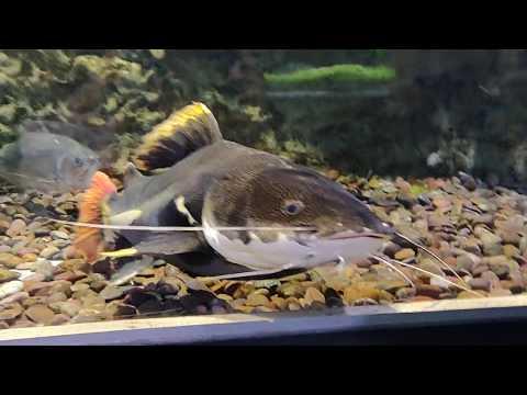 """[video] My Visit To """"dubai Aquarium!"""" V10"""