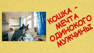Кошка - мечта одинокого мужчины