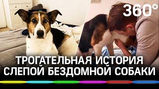 Трогательное видео: слепая собака из московского приюта обрела дом в Швейцарии