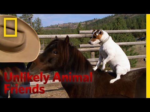 A Dog and Pony Show | Unlikely Animal Friends