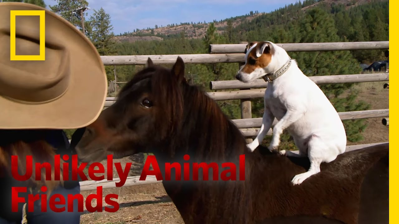 A Dog And Pony Show Unlikely Animal Friends YouTube - 15 unlikely animal friendships will melt heart