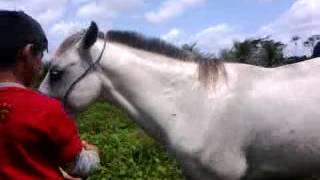 pegando o cavalo branco