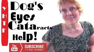 Treating Dogs Eye Infection Cateracts And Ears