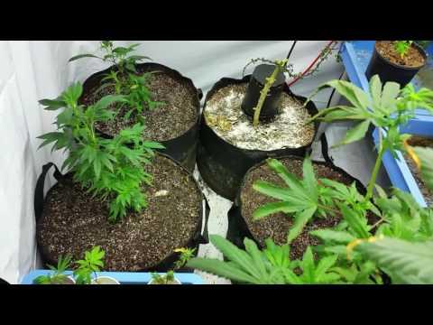 Living Organic Indoor Garden