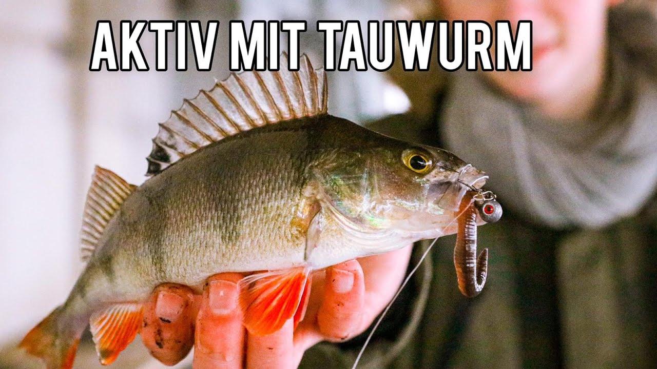 Mit TAUWURM auf BARSCH - Streetfishing in Hamburg in der Schonzeit auf Barsche mit Dropshot und Jig