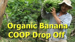Organic Banana COOP Drop Off ~ COSTA RICA