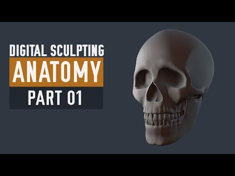 ZBrush Human Anatomy - Skull - Part 01