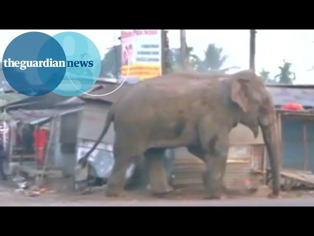 הודו: פיל השתולל והחריב 100 בתים