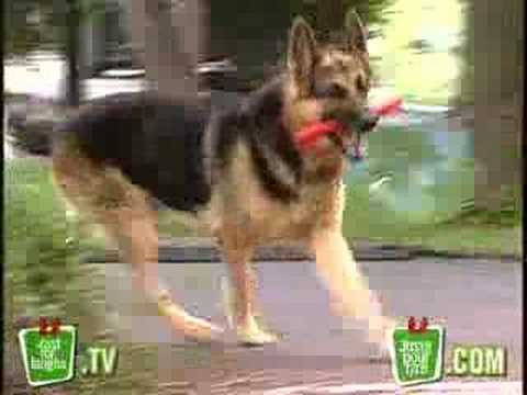 Just For Laugh - Explosive Dog