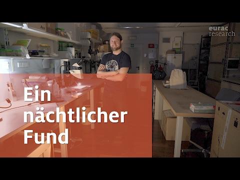 Ein nächtlicher Fund: Saitis tauricus