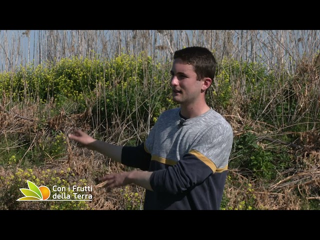 Puntata dell'11/4/21 –  1° parte – Coltivare erbe spontanee