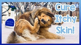 How to Cure Your Dogs Itchy Skin! Tips and Homemade Cures to Stop Your Dog Itching and Scratching! thumbnail