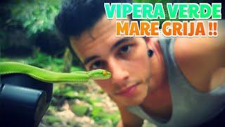 Video AM PRINS UN ŞARPE FOARTE VENINOS DE CAP !! ( VIPERA ) download MP3, 3GP, MP4, WEBM, AVI, FLV November 2017