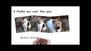 Dog Drooming|tips|dog Insurance |dogs Id Tags|rottweiler|dog Food|dog Pictures|reliable Dog Breed