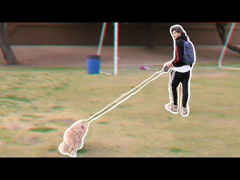 TAKING MY CAT FOR A WALK! *shocking*