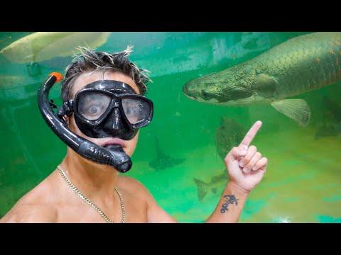 SWIMMING With My DREAM AQUARIUM FISH!!!