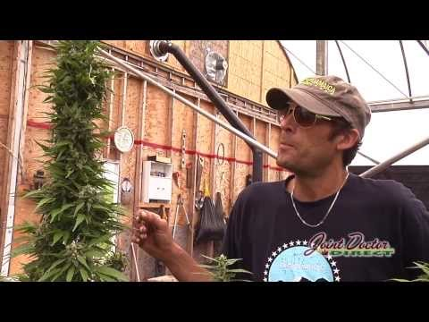 Growing with the Joint Doctor: SuperAutos