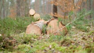 Nachhaltige Holzbeschaffung in Berlin