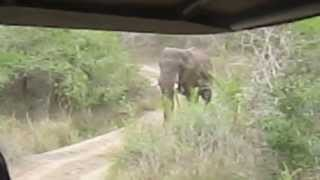 Thula Thula   Elephant charge