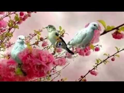 Kur'an ı Kerim Nebe suresi ve meali Ishak Danış