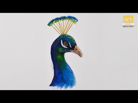 how-to-draw-peacock-drawing-with-colour-ii-by-art-janag