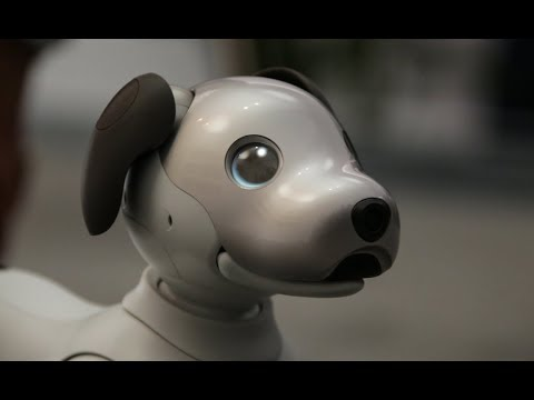 Meet Aibo, the robot dog from Sony