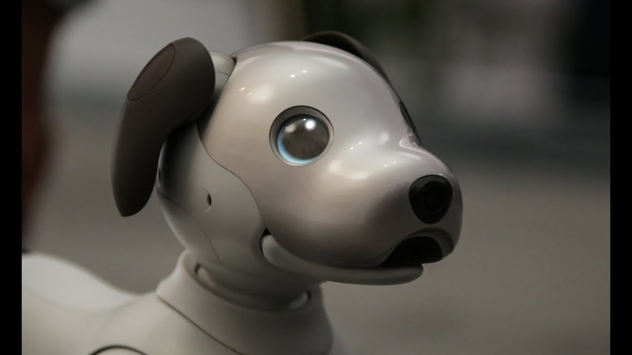 In Japan, created a robo-dog, which will determine how stinky you have socks
