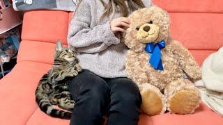 甘えてきた子猫を無視してテディベアを可愛がってみた結果w