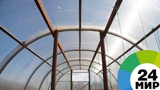 Фермеры Таджикистана сделали ставку на теплицы - МИР 24(, 2018-03-13T12:20:17.000Z)