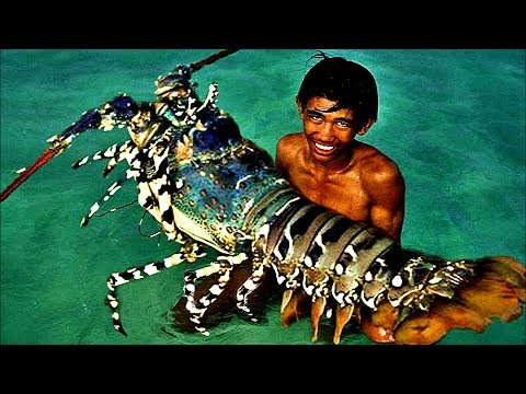Top 5 Biggest Lobsters Ever Caught Youtube