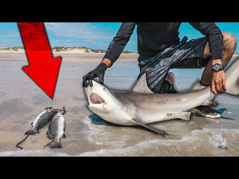 Surf Fishing For SHARK AND TROUT - What Are The Chances This Happened?