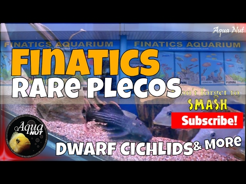 Aquarium Fish Store Shop Tour 2017 of Finatics 🐟 Rare Plecos, Dwarf Cichlids & Oddballs
