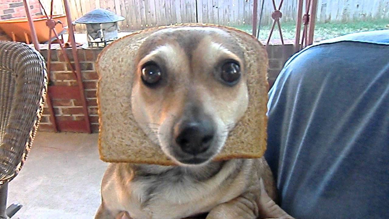 inbred animals - photo #20