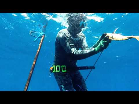 Spearfishing Jupiter, Fl:  MUTTON SNAPPERS