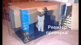 Как сделать из картона домик для кота или кошки