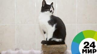 Два года воюют с охраной: коты сделали музей в Японии известным на весь мир - МИР 24