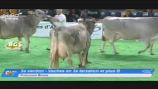 EG2017 - Brune - Vaches en 3e lactation et plus B