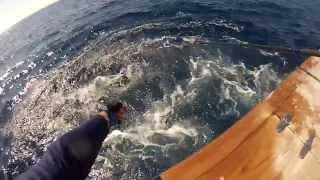 Nc Marlin Fishing 2013