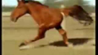 Retarded Running Horse.flv